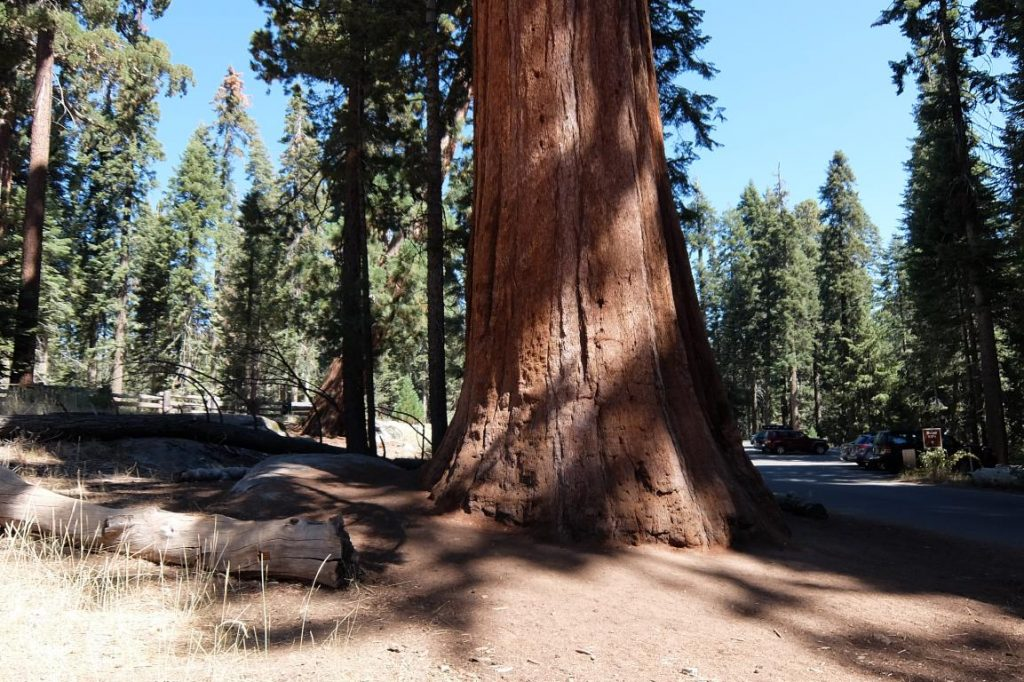 Sequoia national park i giganti