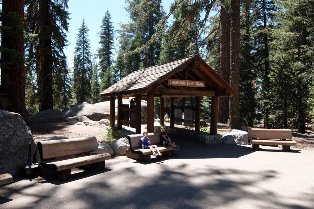 Sequoia nationa park tree trail