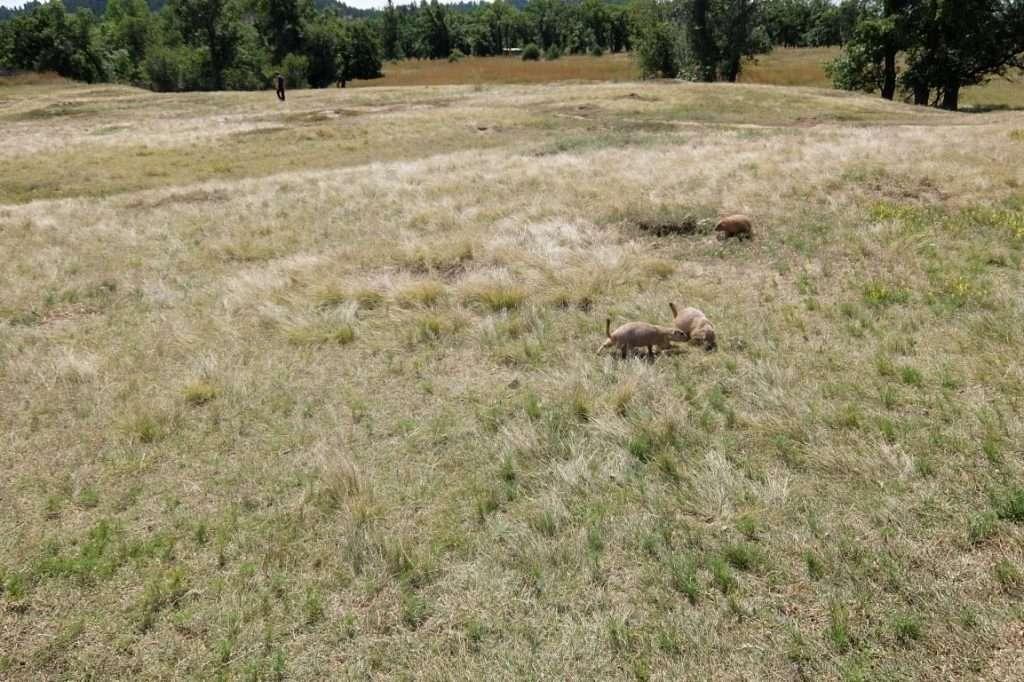 Chipmunks Wyoming