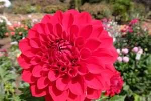 Golden Gate park fiori