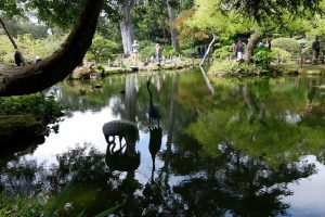 Golden Gate park giardino giapponese laghetto