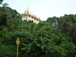 vegetazione sulla collina dorata