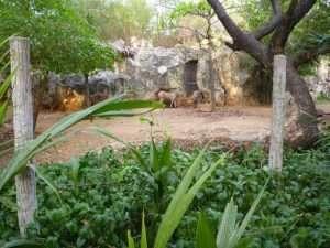 bangkok zoo dusit zebre