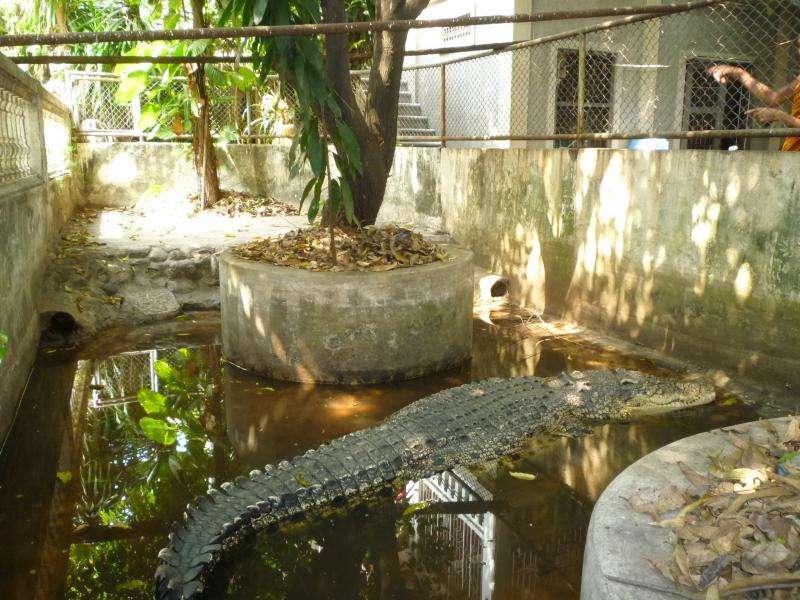 bangkok tempio con coccodrillo