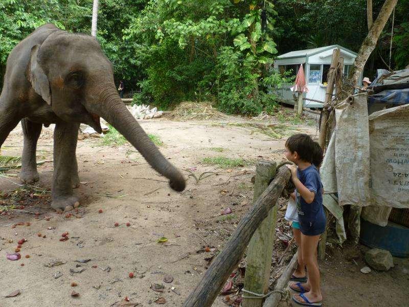 elefantino a ko samui