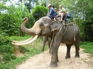 in groppa all'elefante a ko samui