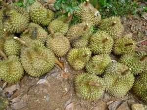 frutta tropicale a ko samui