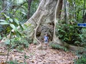 foresta vicino al tempio della tigre