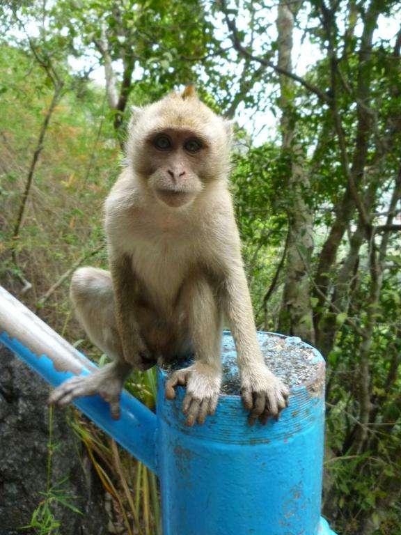 scimmia in attesa a krabi