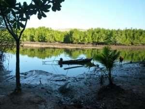 phan nga baia mangrovie