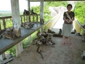 scimmie a prachuap kiri khan