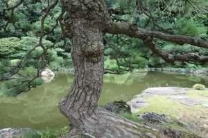 Koishikawa Korakuen Park