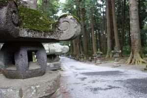 Viale delle criptomerie al monte Fuji