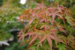 Acero rosso a Nara