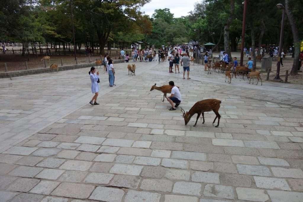 Nara cervi nel parco