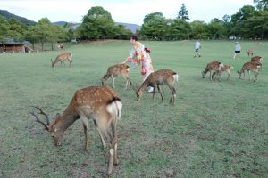 Daini a Nara