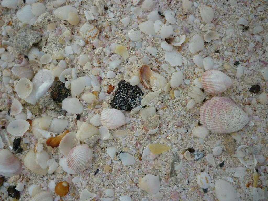 Spiaggia di Umm Suqueim
