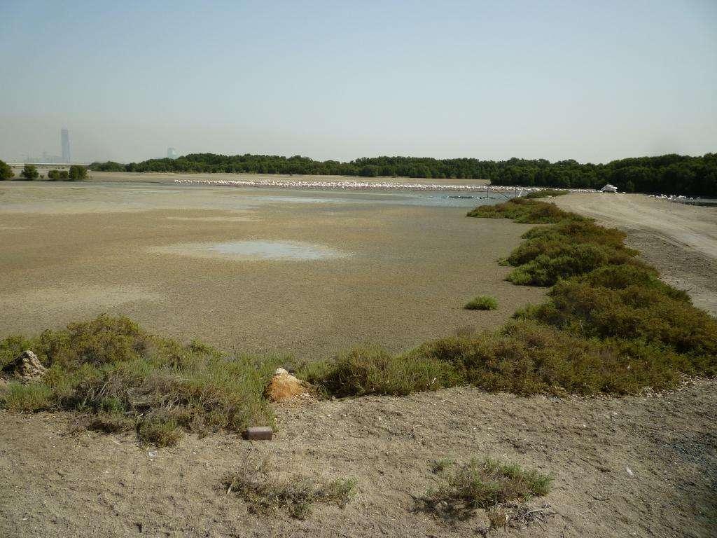 ras al khor wildlife sanctuary Dubai
