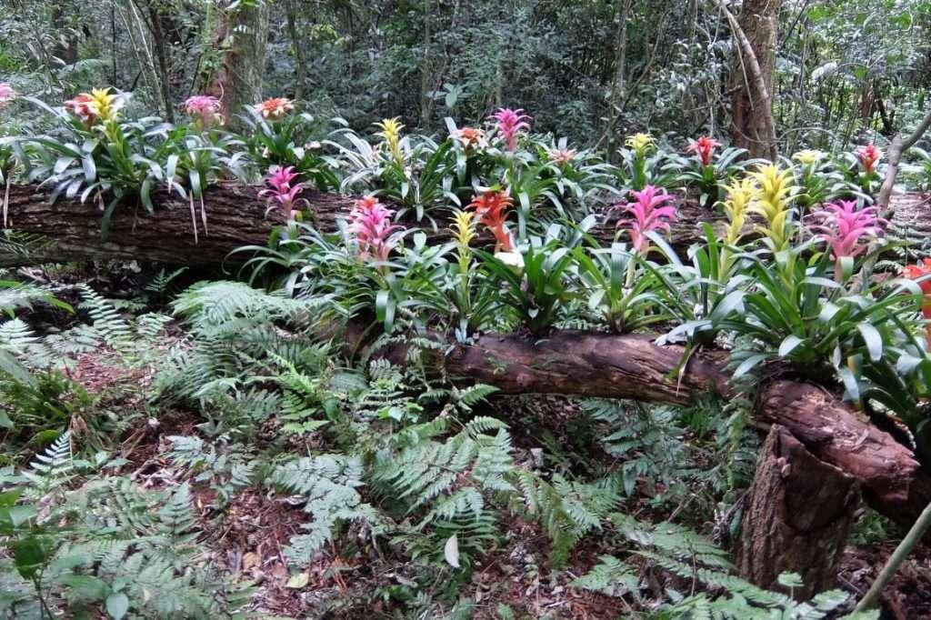 Flora del parco degli uccelli a Iguazù