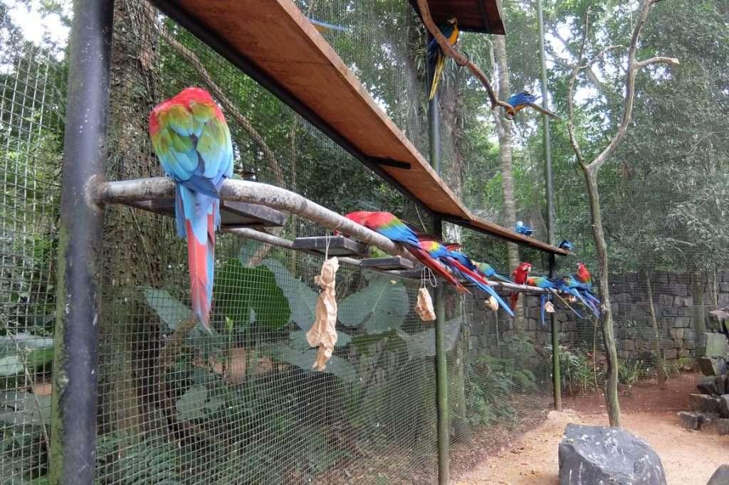 Pappagalli a Iguazù