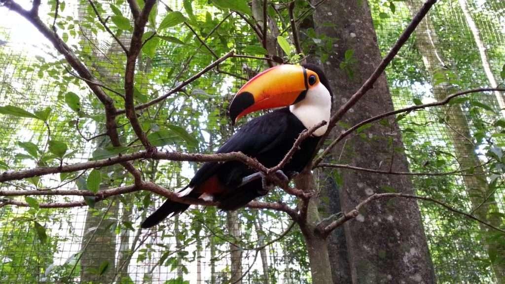 Tucano al parco degli uccelli