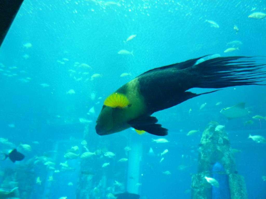 the lost chamber aquarium