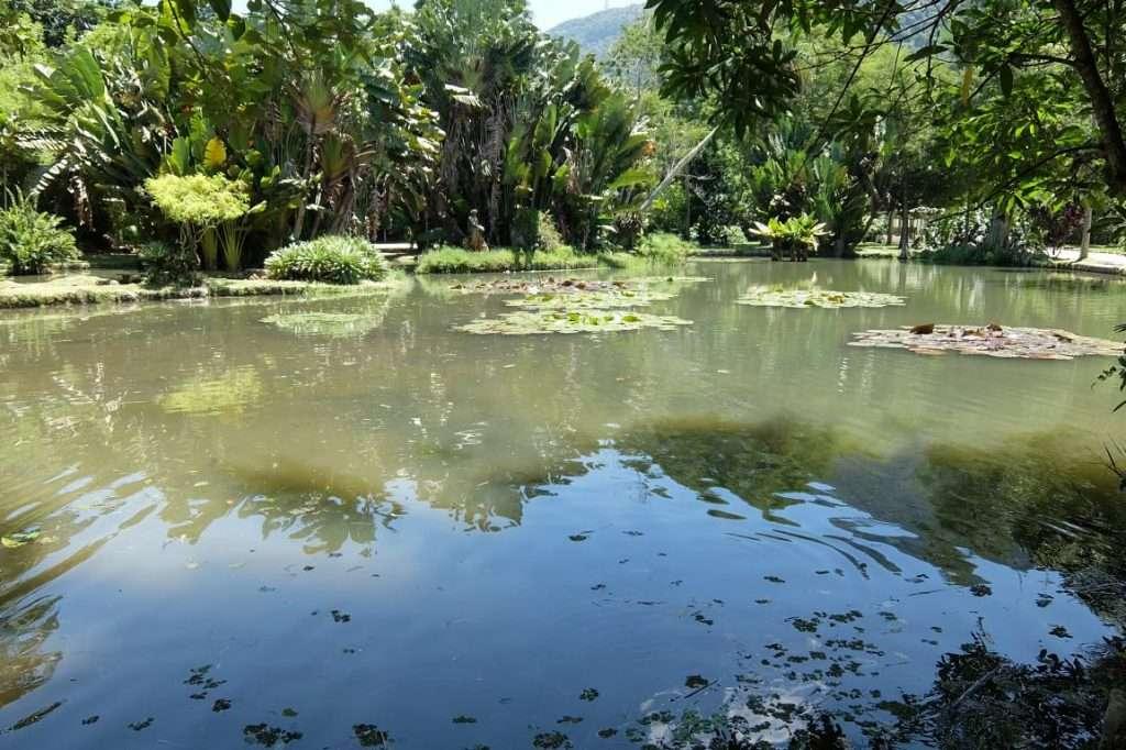 laghetto nel giardino botanico
