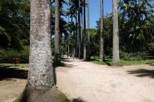 viale del giardino botanico