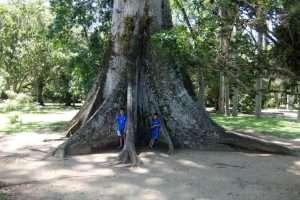alberi tropicali