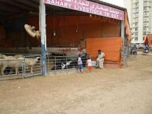 mercato di Sharjah degli animali