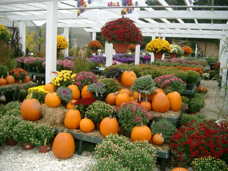 Zucche nel New England per Halloween