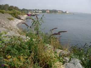 Cliff Walk a Newport
