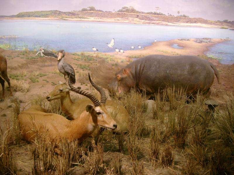 Museo storia naturale i diorami