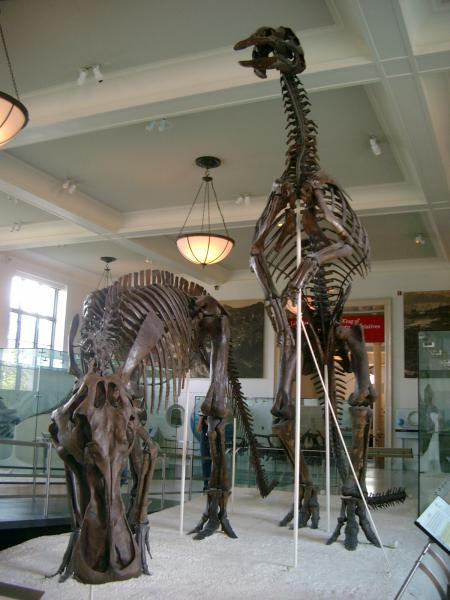 Sala dei dinosauri al museo di storia naturale