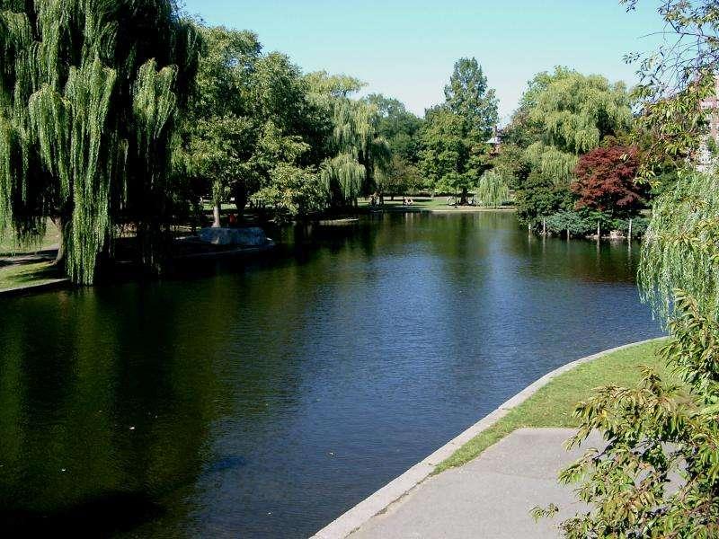 Laghetto del Public Garden di Boston