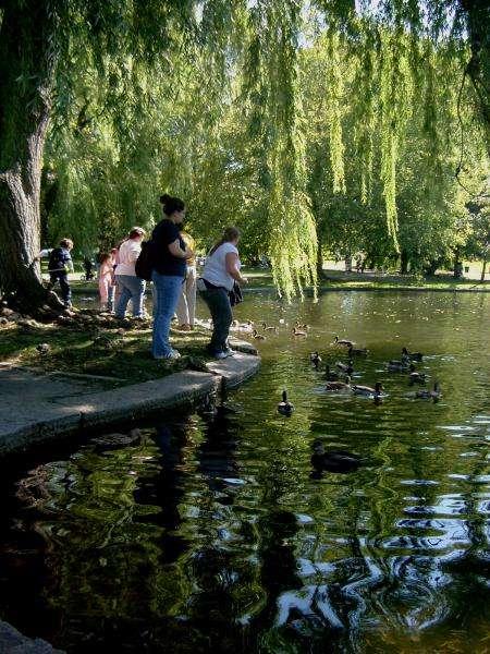 Laghetto con anatre al Public Garden di Boston