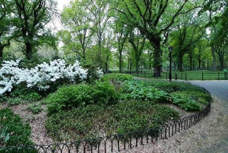 Central park New York sentieri fioriti