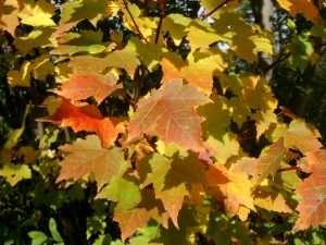 White mountains New Hampshire foliage