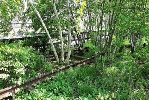 Vecchi binari sulla High Line