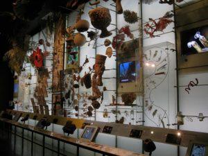 Esposizioni del museo di storia naturale