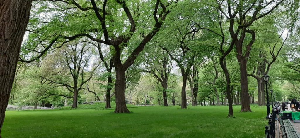 Viali a Central Park