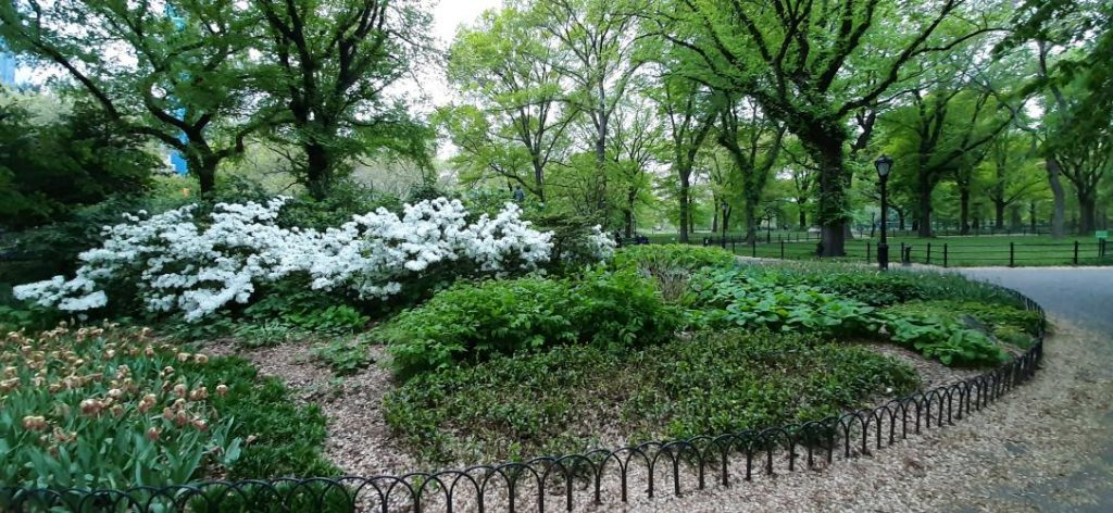 Aiuole a Central Park